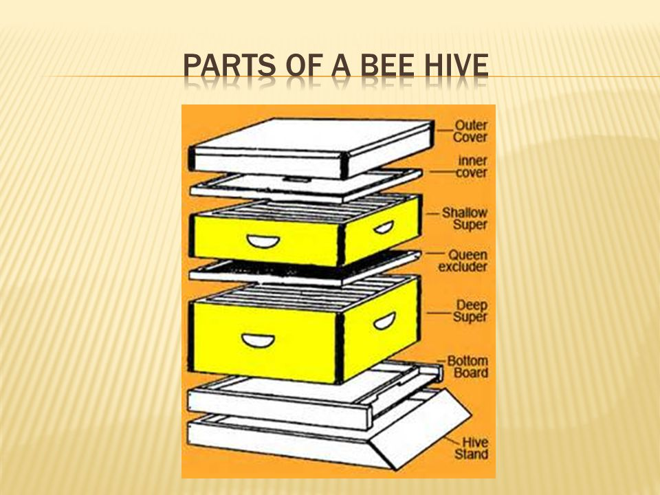 Parts of a bee hive