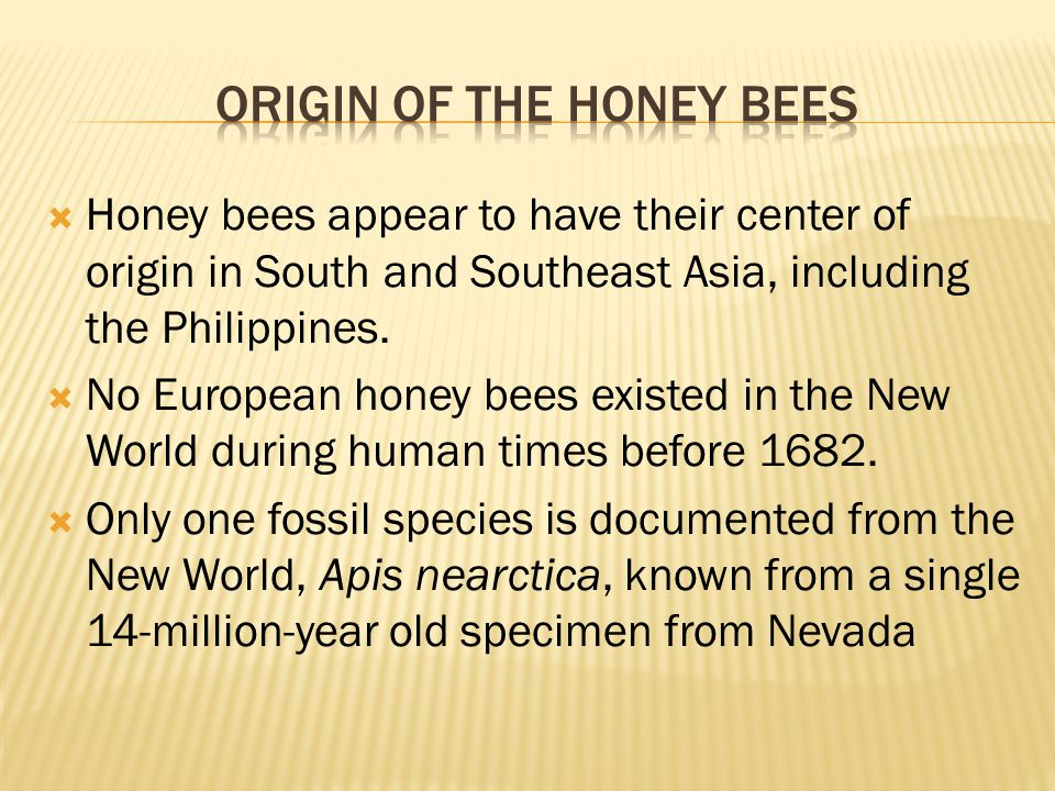 Origin of the Honey bees