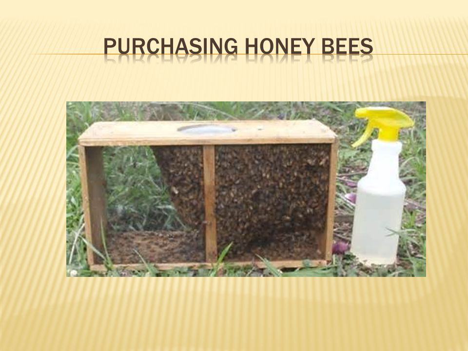 Purchasing honey bees