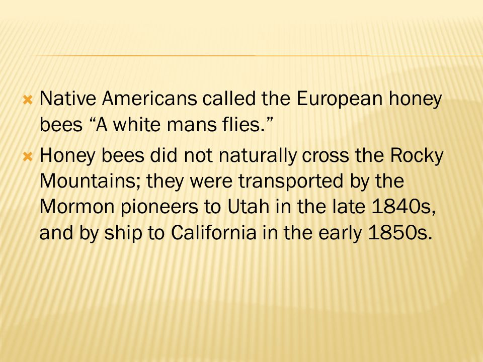 Native Americans called the European honey bees A white mans flies.