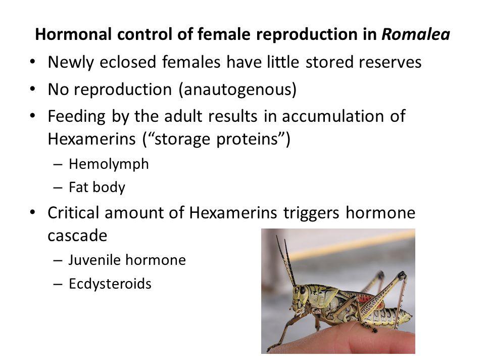 Hormonal control of female reproduction in Romalea