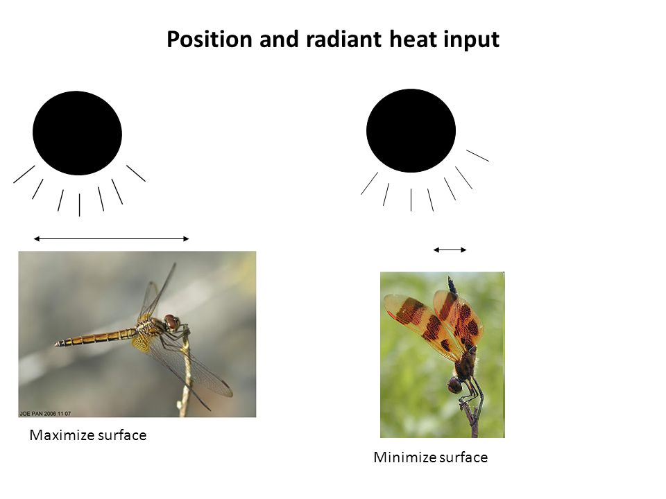 Position and radiant heat input