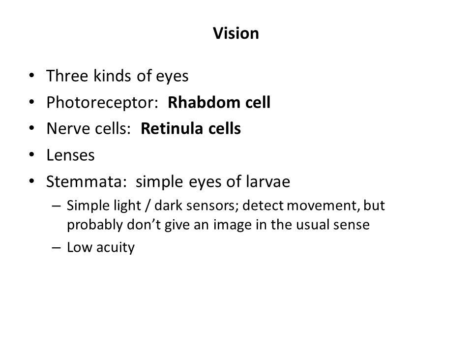 Photoreceptor: Rhabdom cell Nerve cells: Retinula cells Lenses
