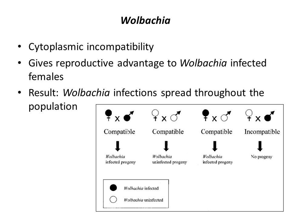 Wolbachia Cytoplasmic incompatibility. Gives reproductive advantage to Wolbachia infected females.
