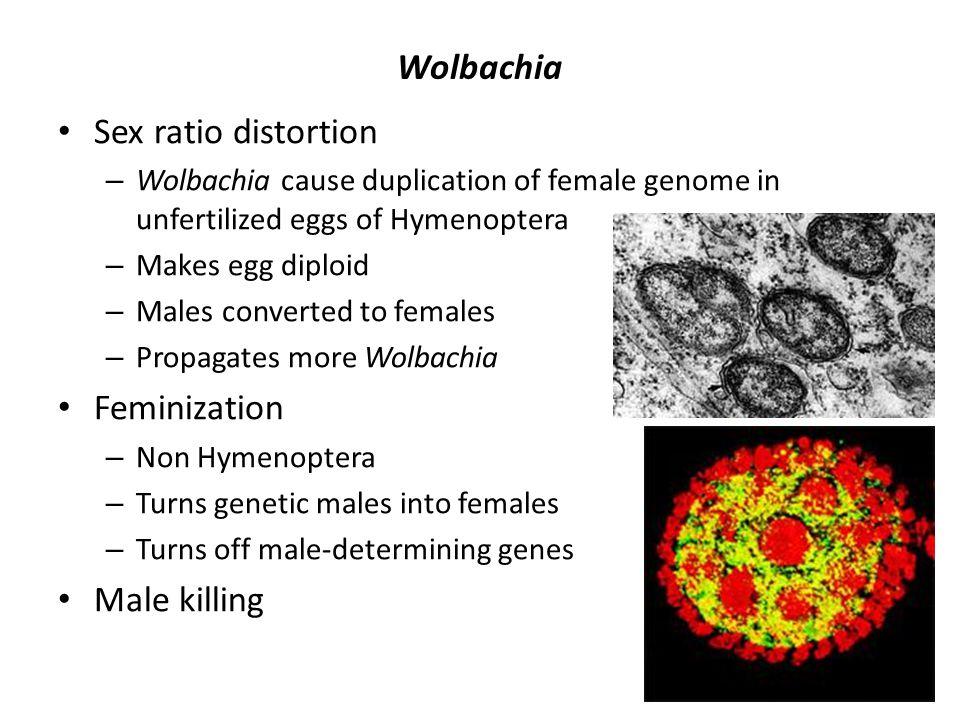 Wolbachia Sex ratio distortion Feminization Male killing