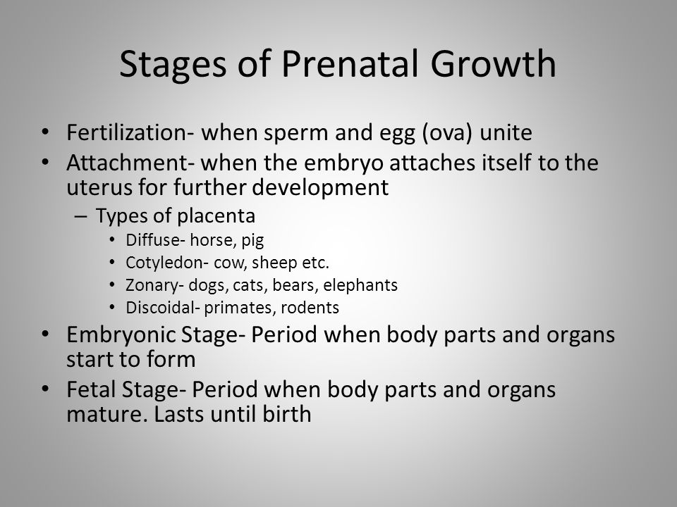 Stages of Prenatal Growth