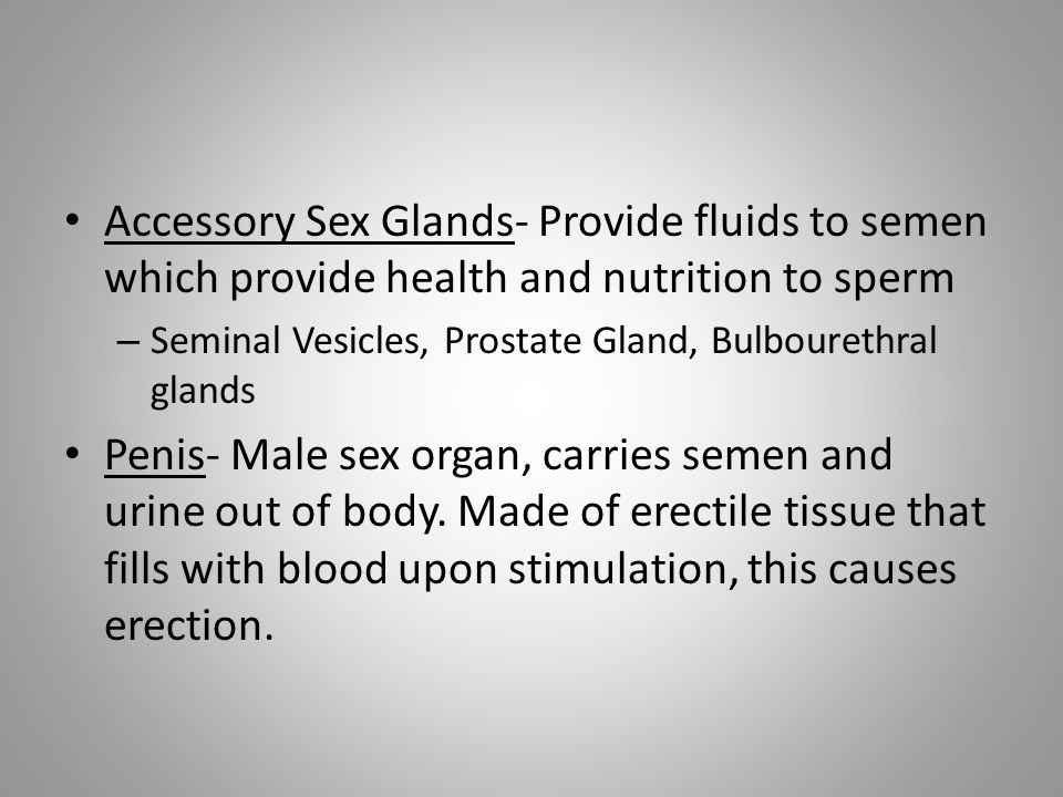 Accessory Sex Glands- Provide fluids to semen which provide health and nutrition to sperm