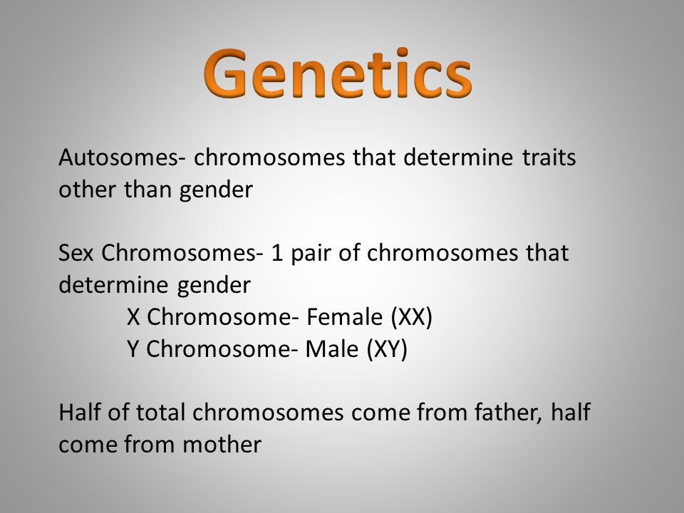 Genetics Autosomes- chromosomes that determine traits other than gender. Sex Chromosomes- 1 pair of chromosomes that determine gender.