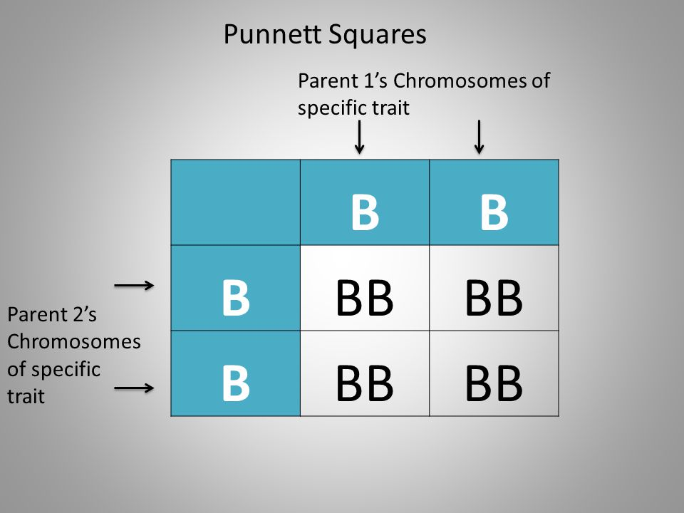 B BB Punnett Squares Parent 1's Chromosomes of specific trait