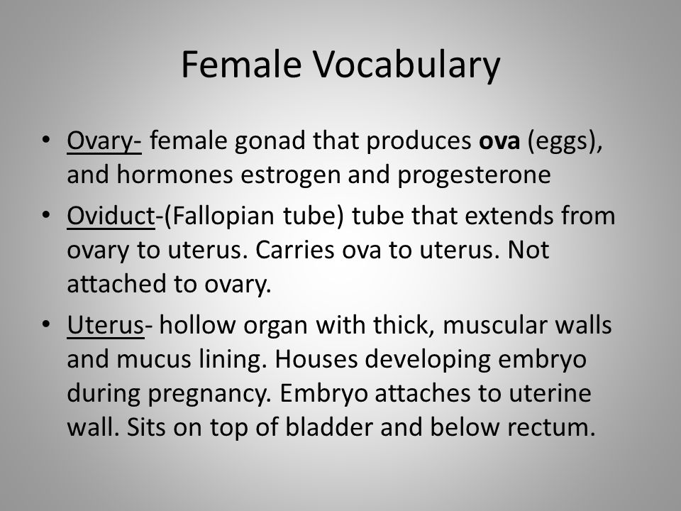 Female Vocabulary Ovary- female gonad that produces ova (eggs), and hormones estrogen and progesterone.