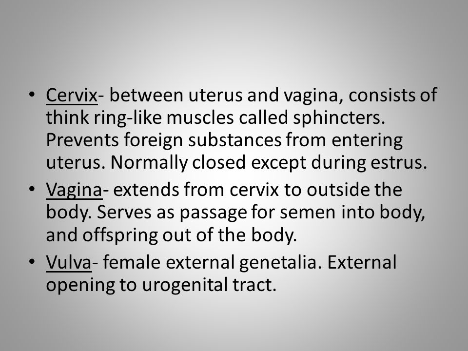 Cervix- between uterus and vagina, consists of think ring-like muscles called sphincters. Prevents foreign substances from entering uterus. Normally closed except during estrus.
