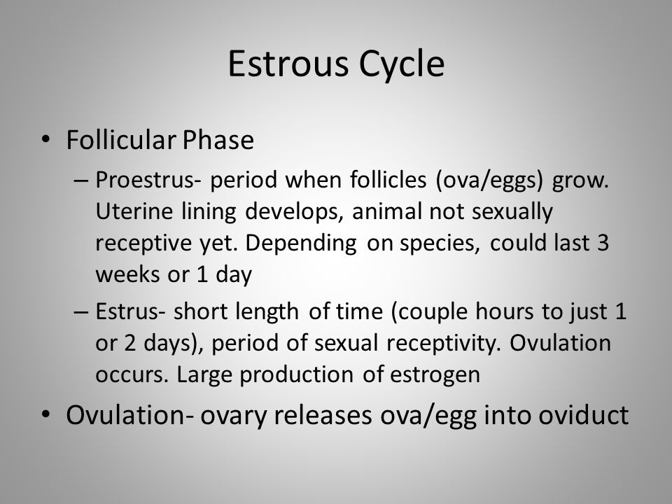 Estrous Cycle Follicular Phase