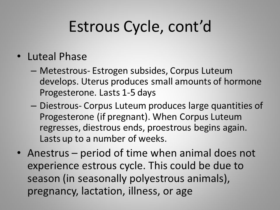 Estrous Cycle, cont'd Luteal Phase