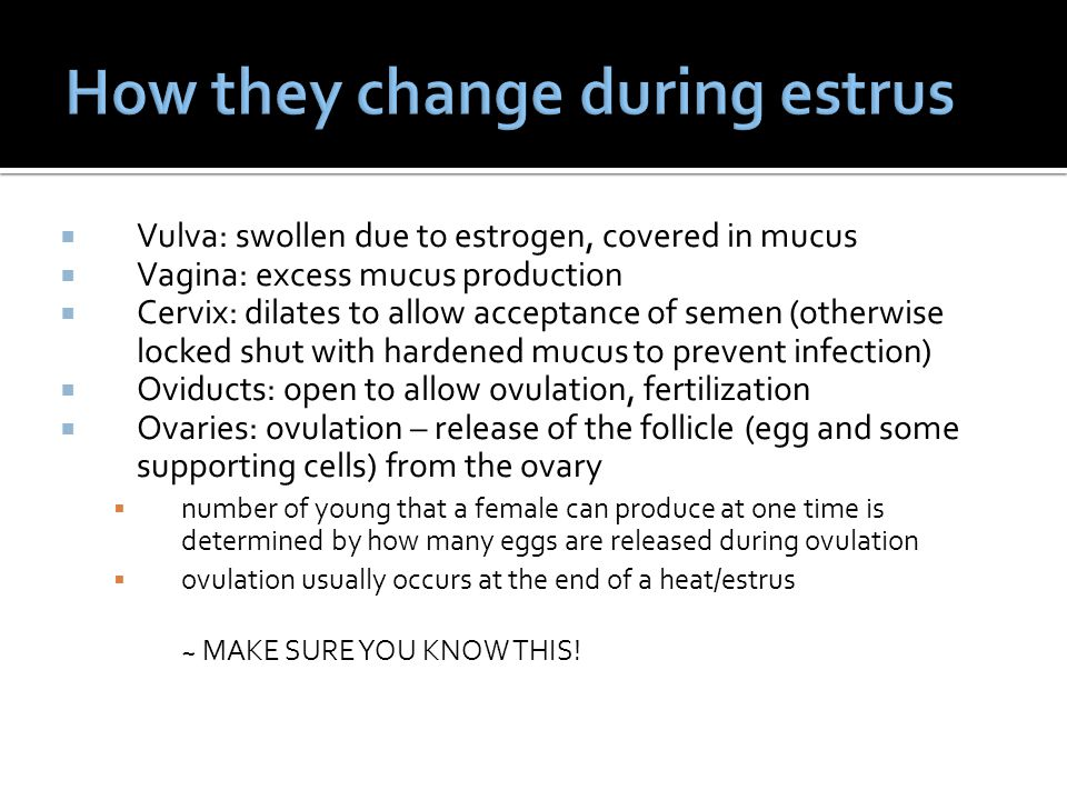 How they change during estrus