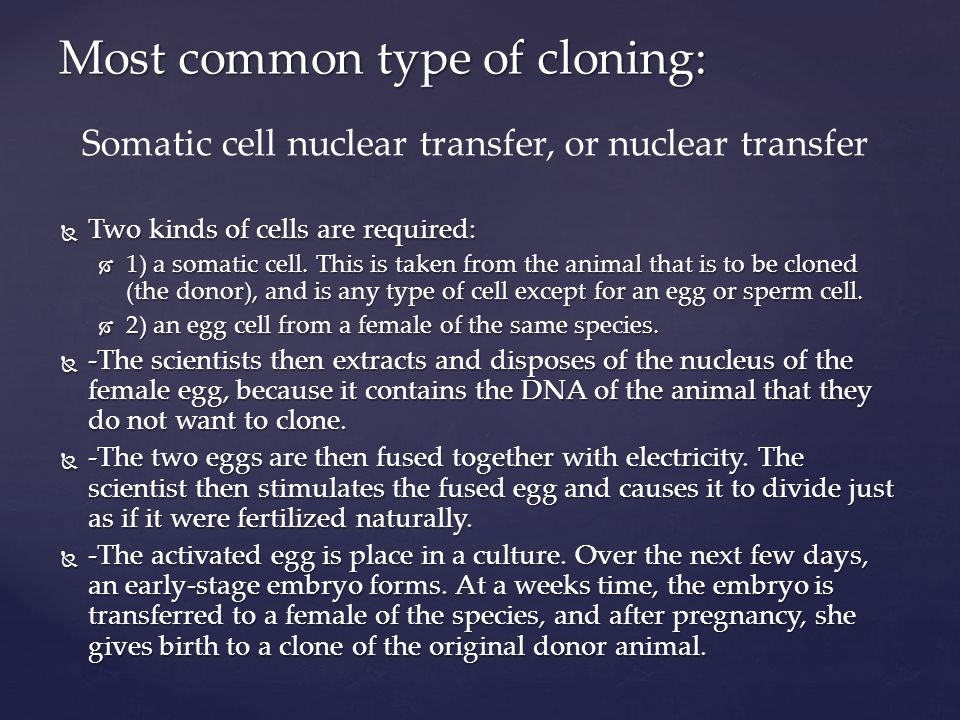 Most common type of cloning: