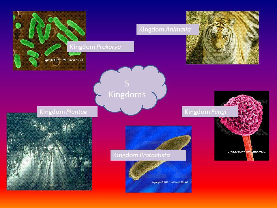 5 Kingdoms Kingdom Animalia Kingdom Prokarya Kingdom Plantae