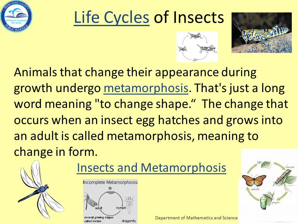 Insects and Metamorphosis