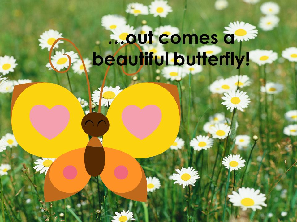 …out comes a beautiful butterfly!