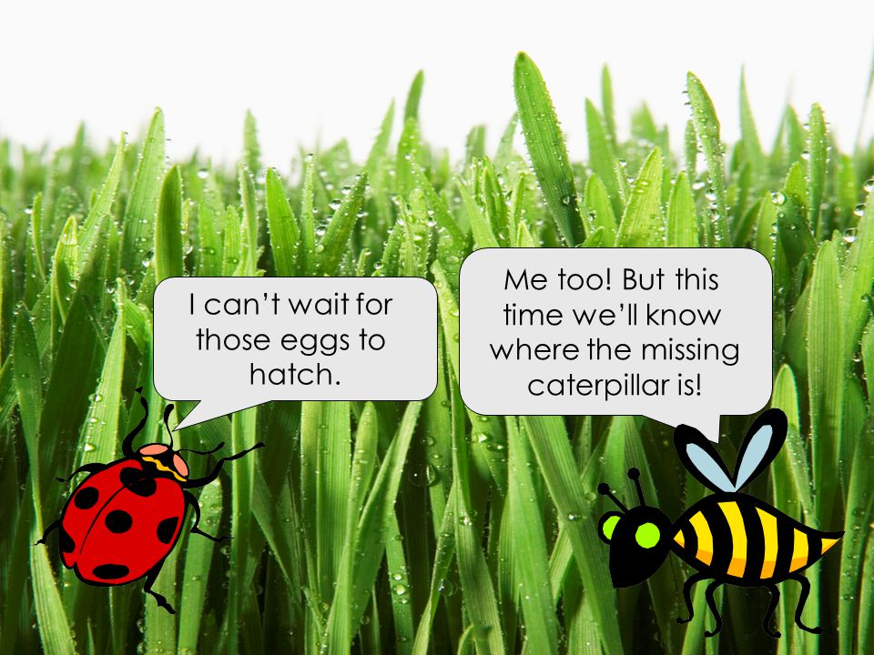 Me too! But this time we'll know. where the missing. caterpillar is! I can't wait for. those eggs to.
