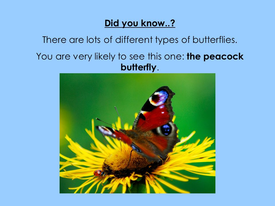 There are lots of different types of butterflies.