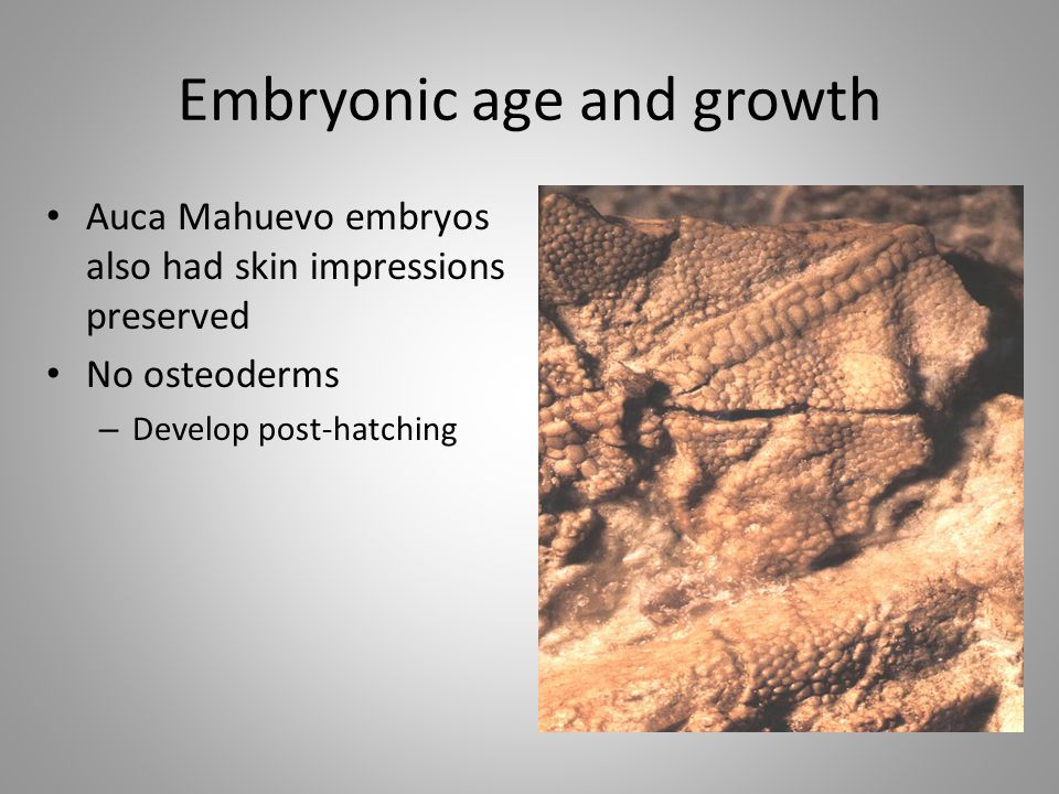 Embryonic age and growth