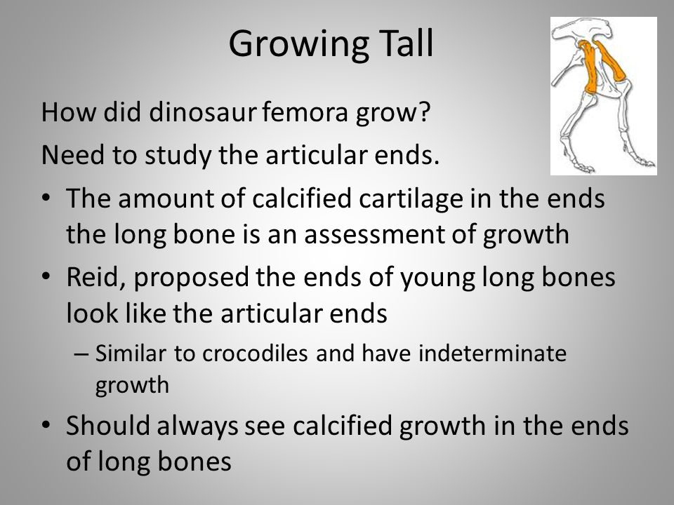 Growing Tall How did dinosaur femora grow
