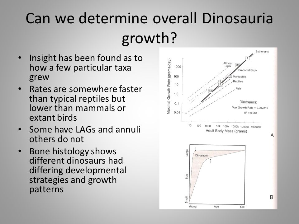 Can we determine overall Dinosauria growth