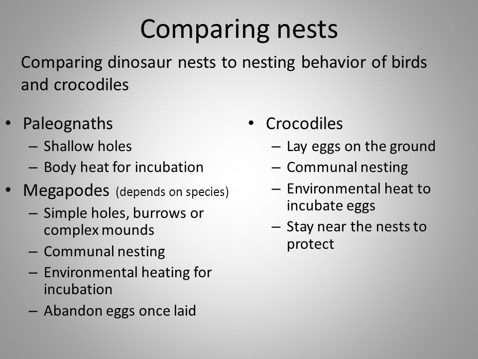 Comparing nests Comparing dinosaur nests to nesting behavior of birds and crocodiles. Paleognaths.