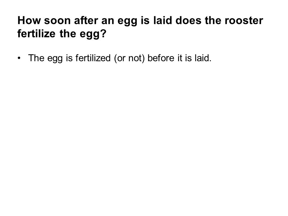 How soon after an egg is laid does the rooster fertilize the egg