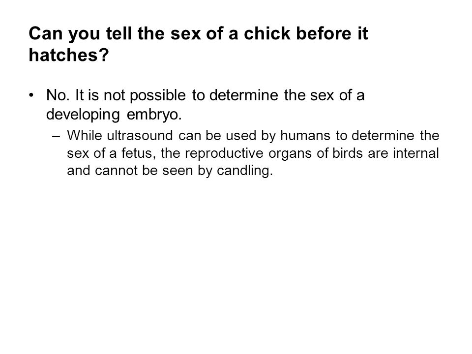 Can you tell the sex of a chick before it hatches