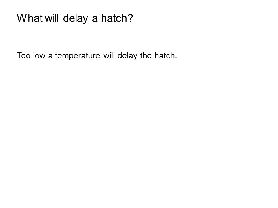 What will delay a hatch Too low a temperature will delay the hatch.