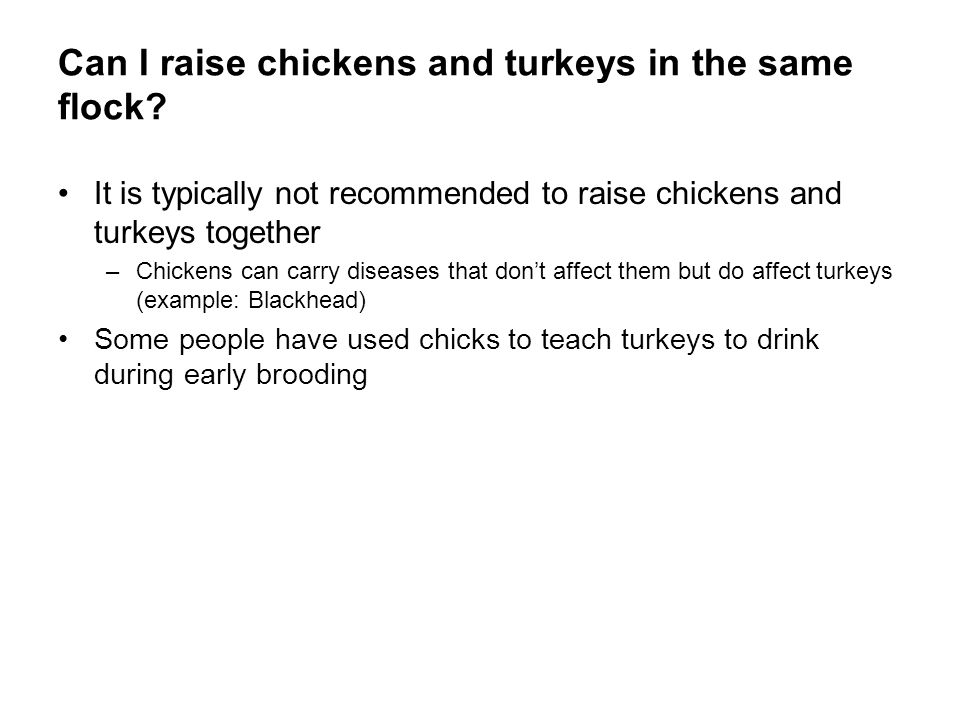 Can I raise chickens and turkeys in the same flock
