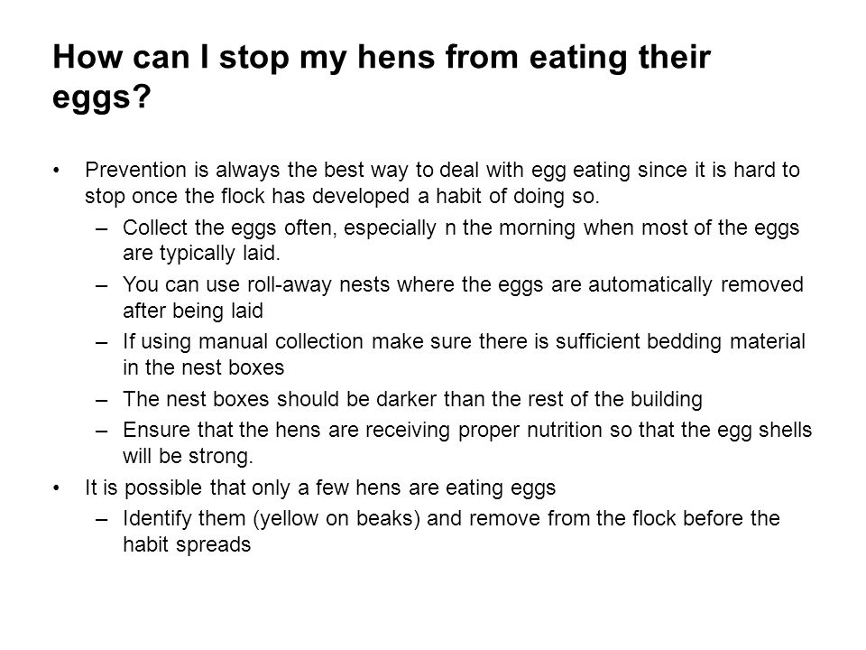 How can I stop my hens from eating their eggs