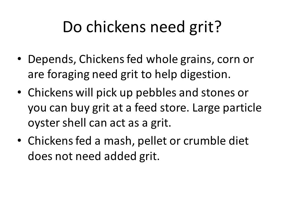 Do chickens need grit Depends, Chickens fed whole grains, corn or are foraging need grit to help digestion.