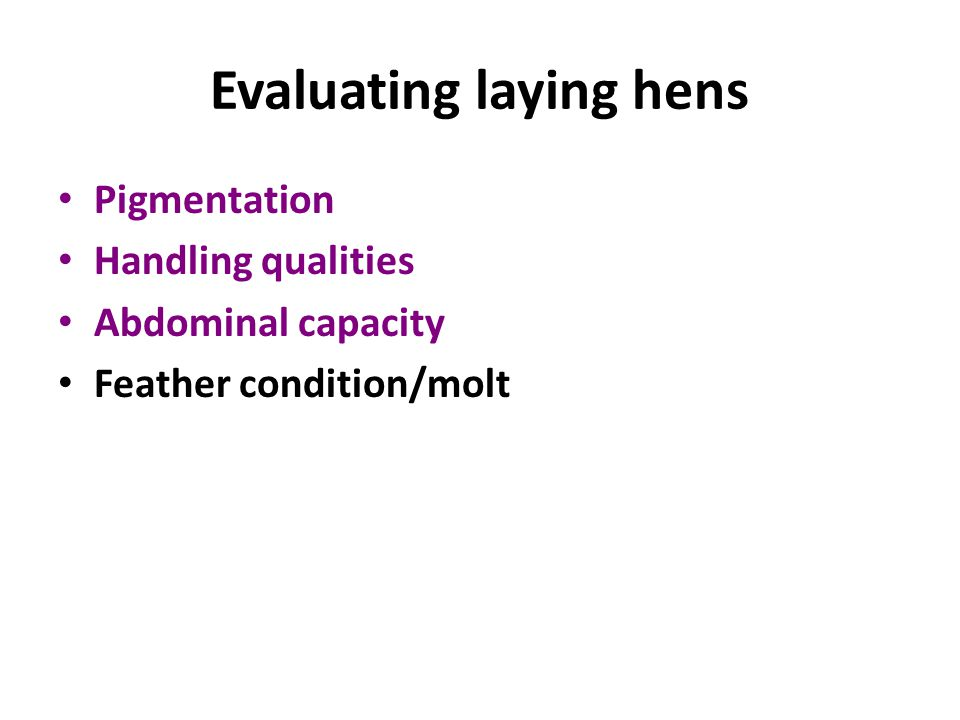 Evaluating laying hens