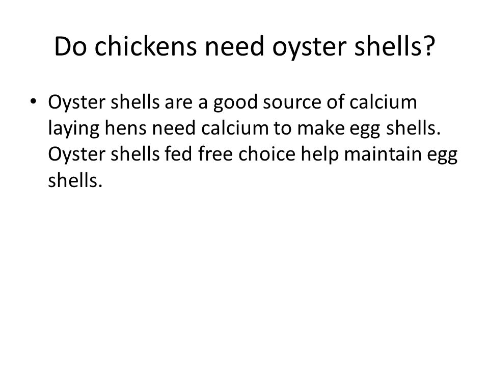 Do chickens need oyster shells