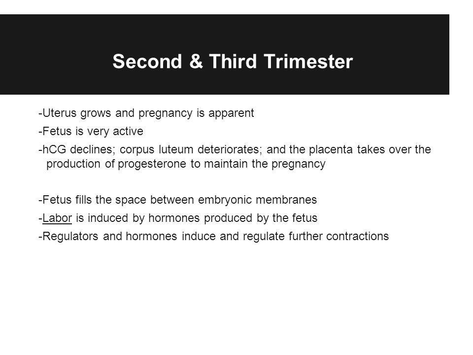 Second & Third Trimester