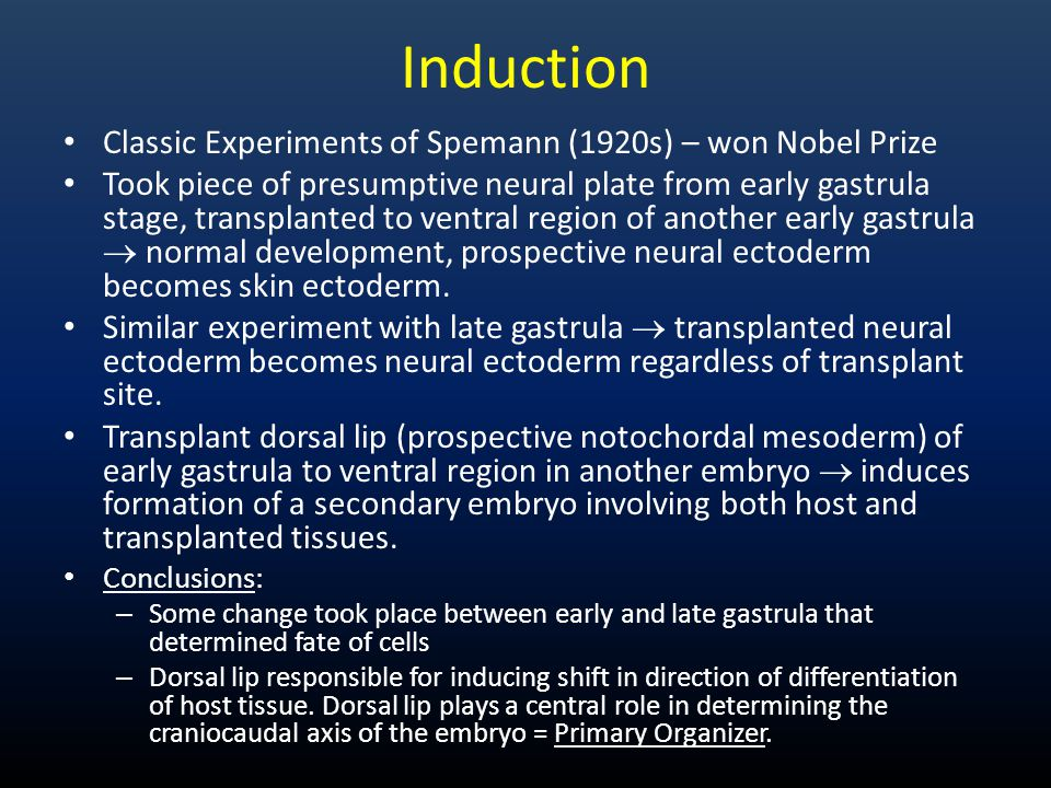 Induction Classic Experiments of Spemann (1920s) – won Nobel Prize