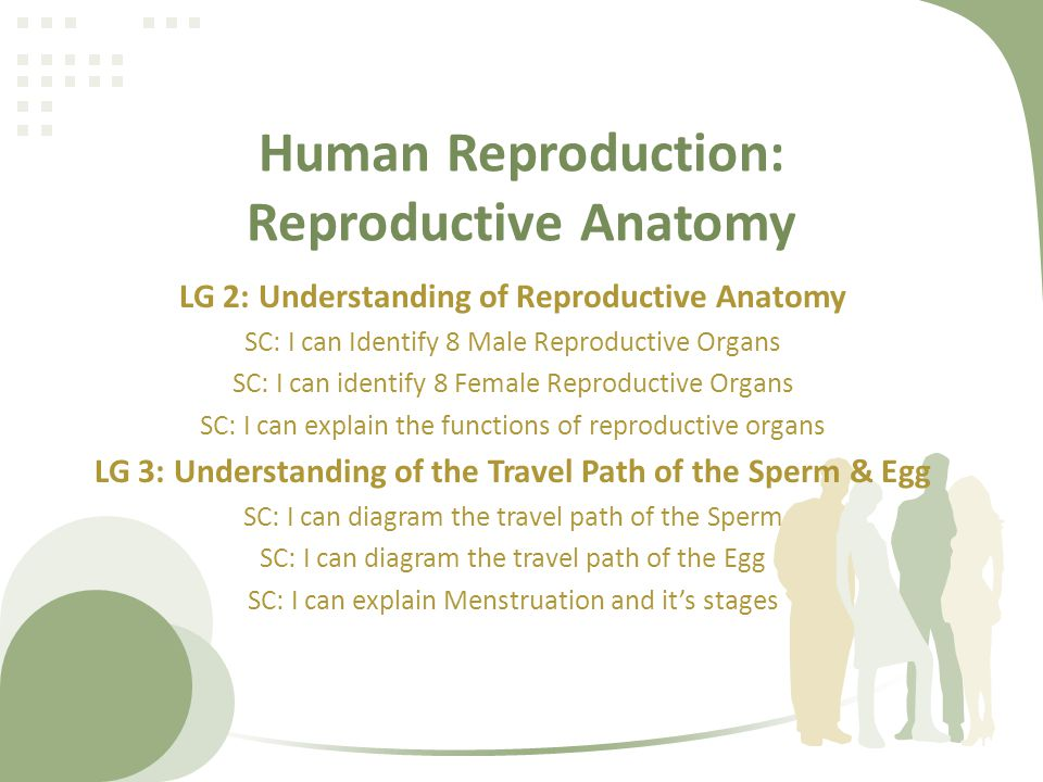Human Reproduction: Reproductive Anatomy - ppt video online download