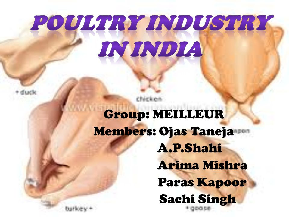 POULTRY industry in india