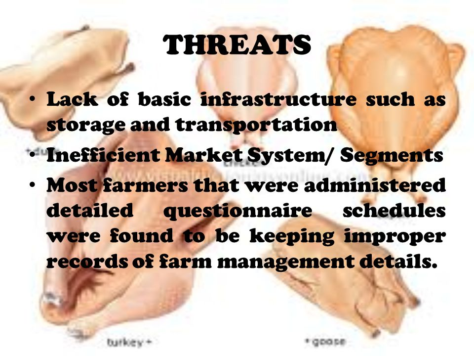 THREATS Lack of basic infrastructure such as storage and transportation. Inefficient Market System/ Segments.