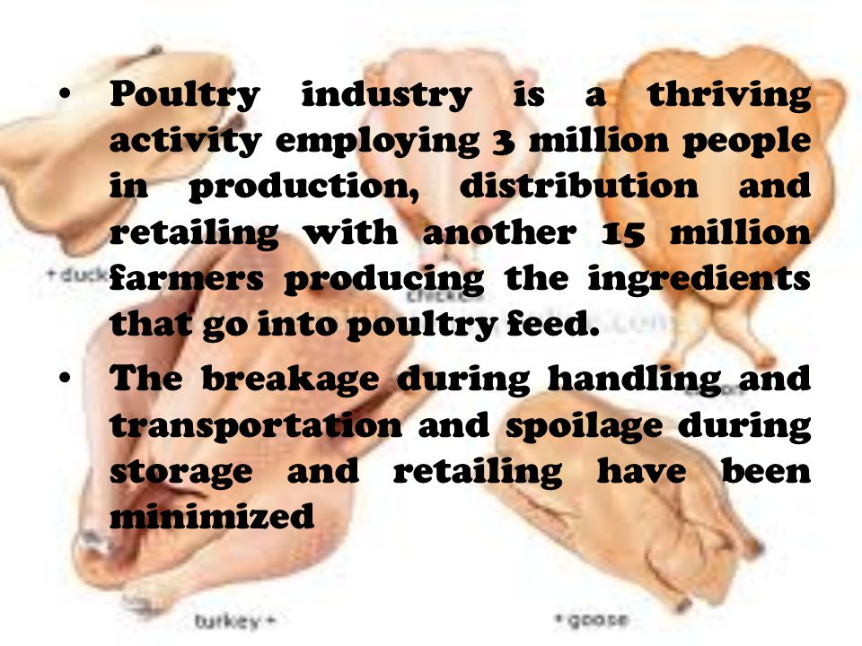 Poultry industry is a thriving activity employing 3 million people in production, distribution and retailing with another 15 million farmers producing the ingredients that go into poultry feed.