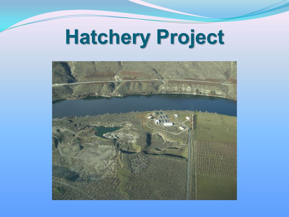 Hatchery Project