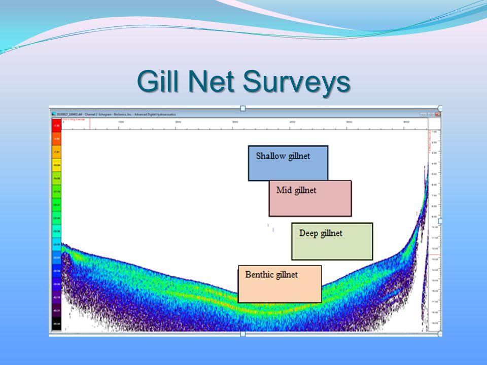 Gill Net Surveys