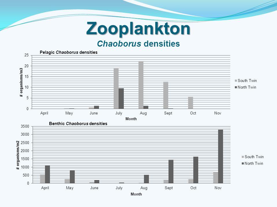 Zooplankton Chaoborus densities