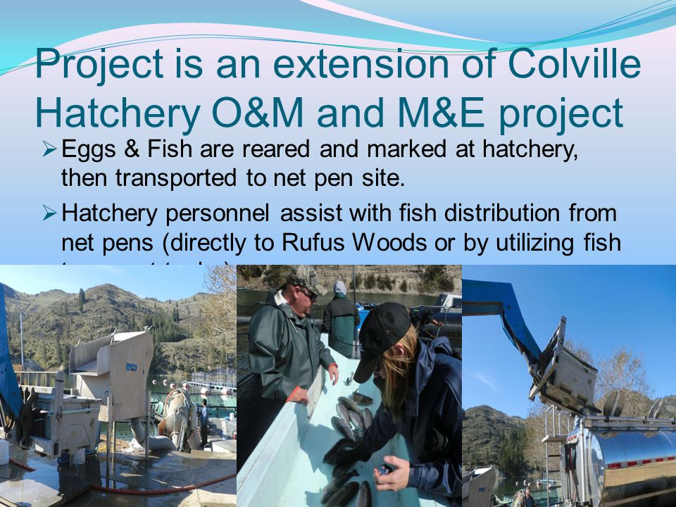 Project is an extension of Colville Hatchery O&M and M&E project