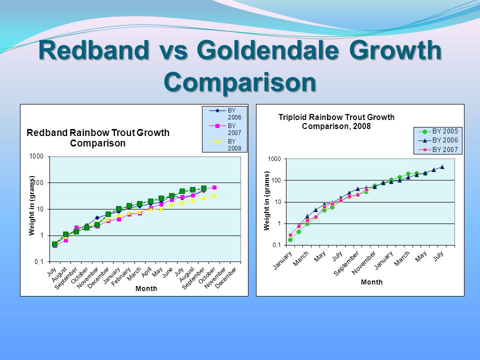 Redband vs Goldendale Growth Comparison