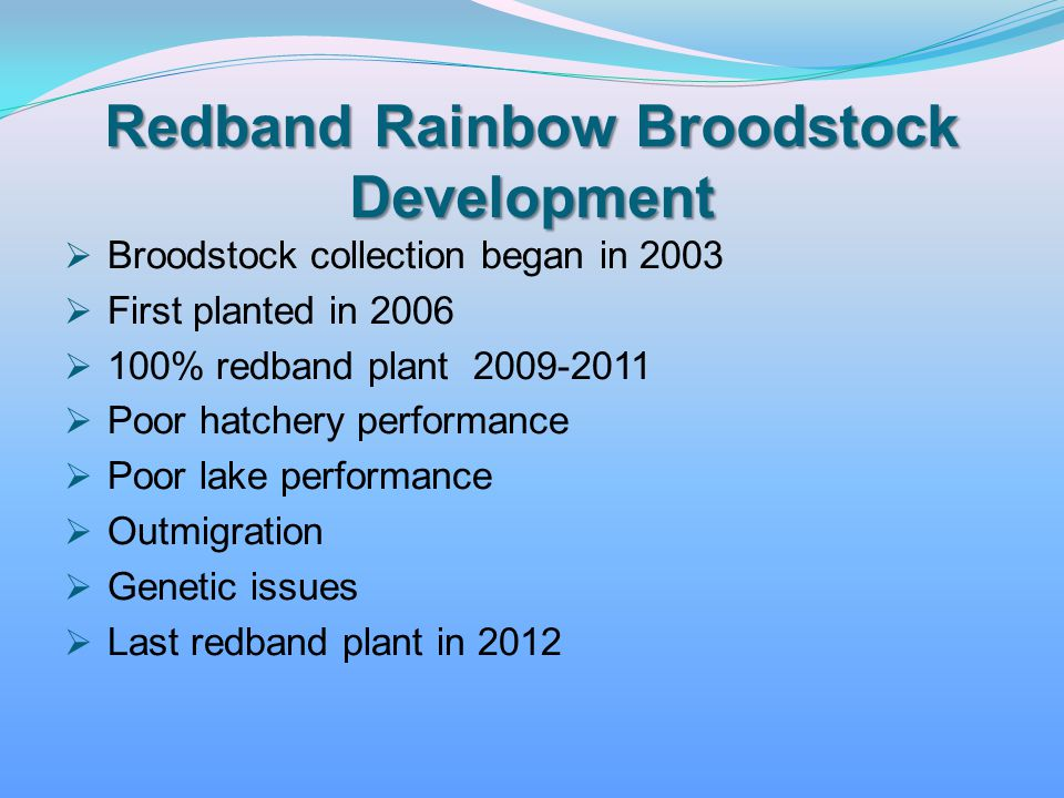 Redband Rainbow Broodstock Development
