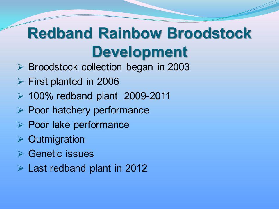 Redband Rainbow Broodstock Development