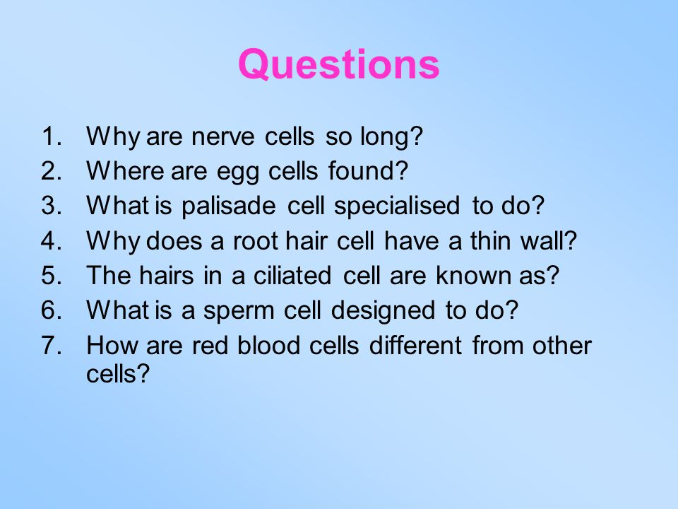 Questions Why are nerve cells so long Where are egg cells found
